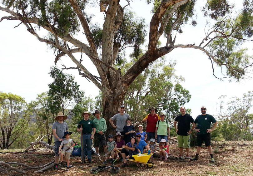 Mulching crew