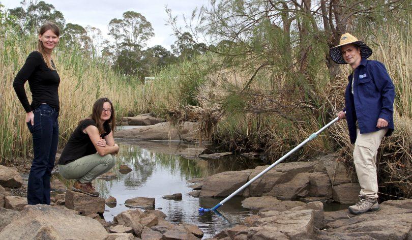Ginninderra Creek, fish kills, water catchment