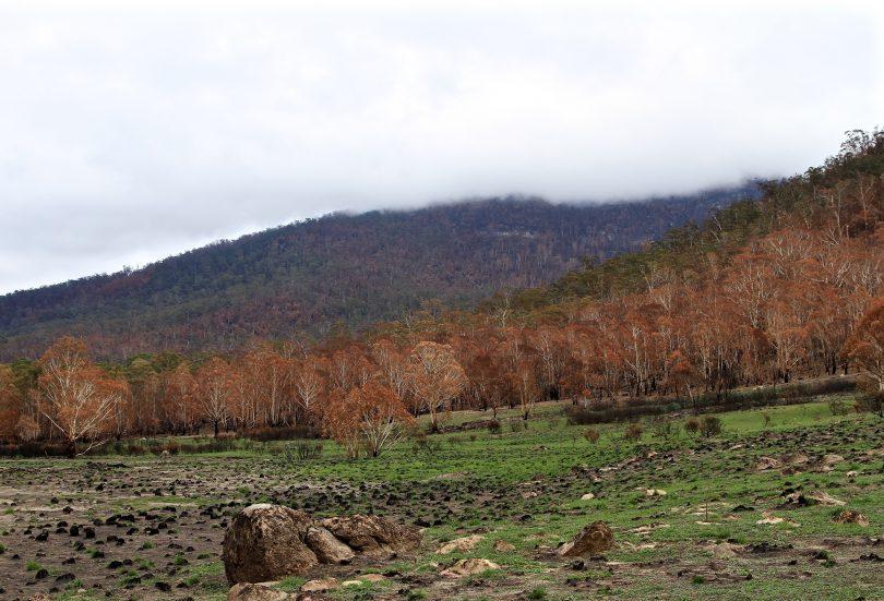 Orroral Valley fire. Namadgi National Park Photo: Michael Weaver, Region Media