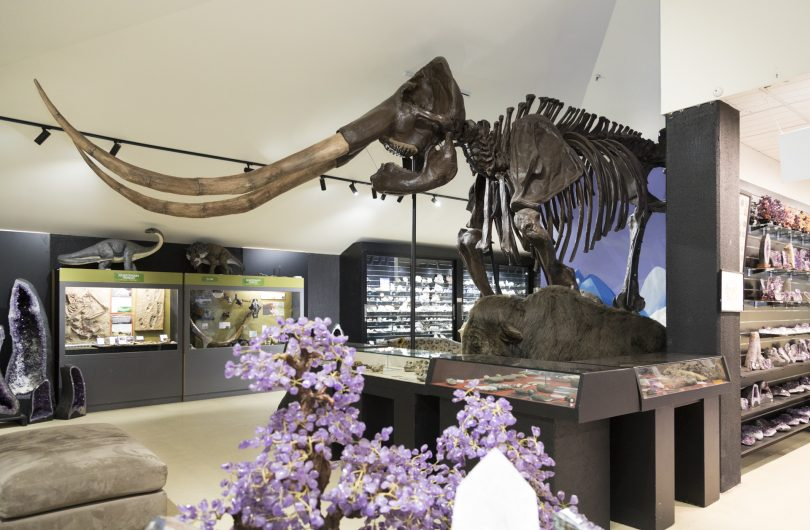 The gift shop is a wonder by itself, with thousands of crystals, fossils and toys.