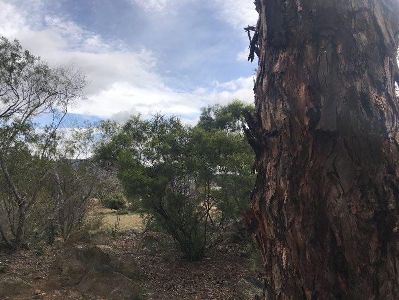 The former CSIRO site