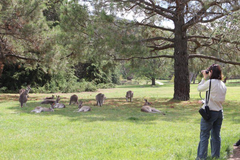 Monitoring kangaroos