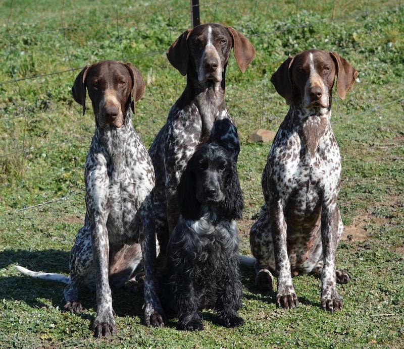 Christine Forsyth's four dogs sitting on grass.