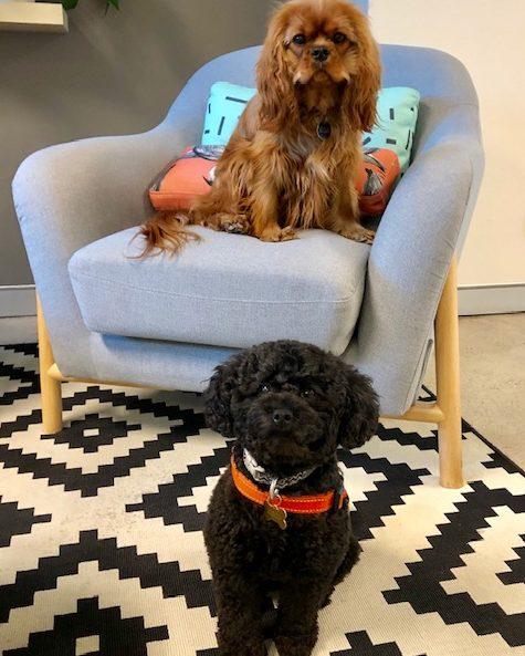 Bella and Coco