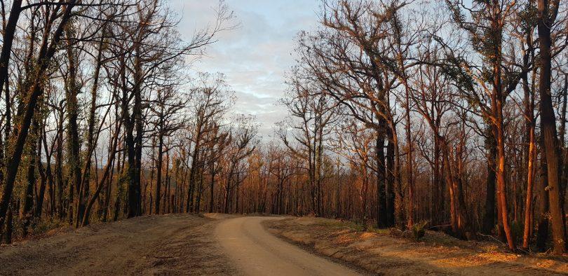 Eurobodalla forests