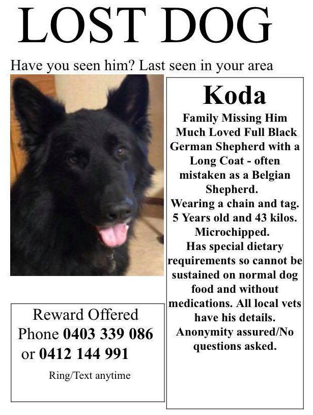 Missing dog flyer