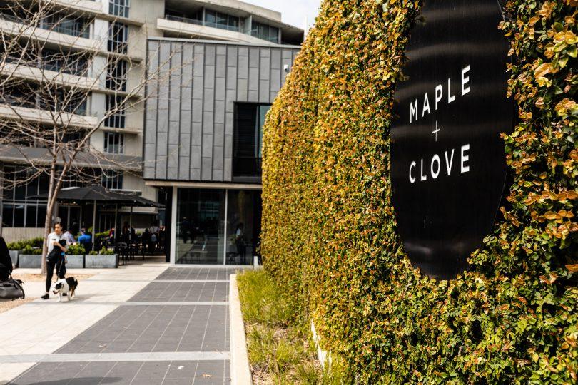 Maple + Clove