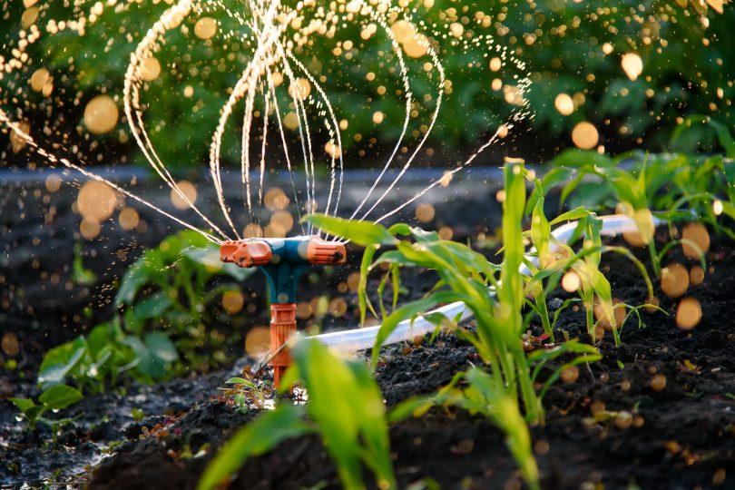 Sprinkler watering garden.