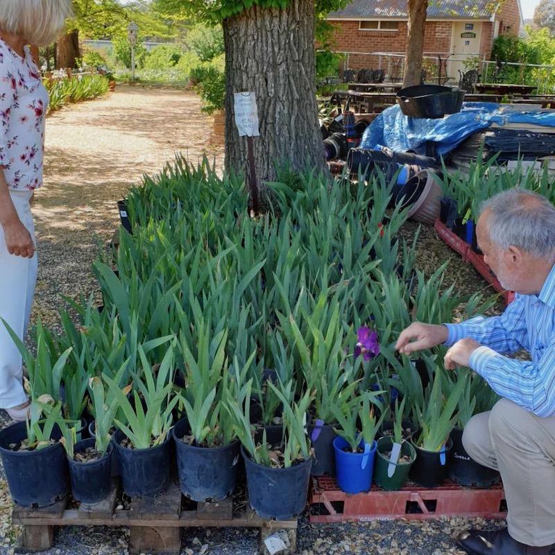 Volunteers tending to plants for sale at Riversdale.