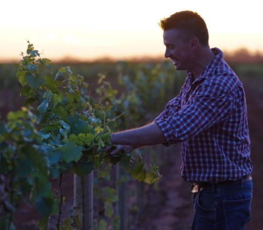 Andrew Higgins at McWilliams vineyard.
