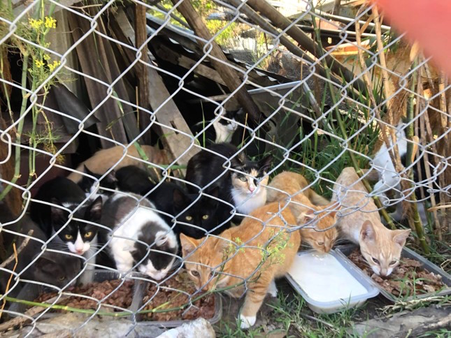 A colony of cats at Fyshwick