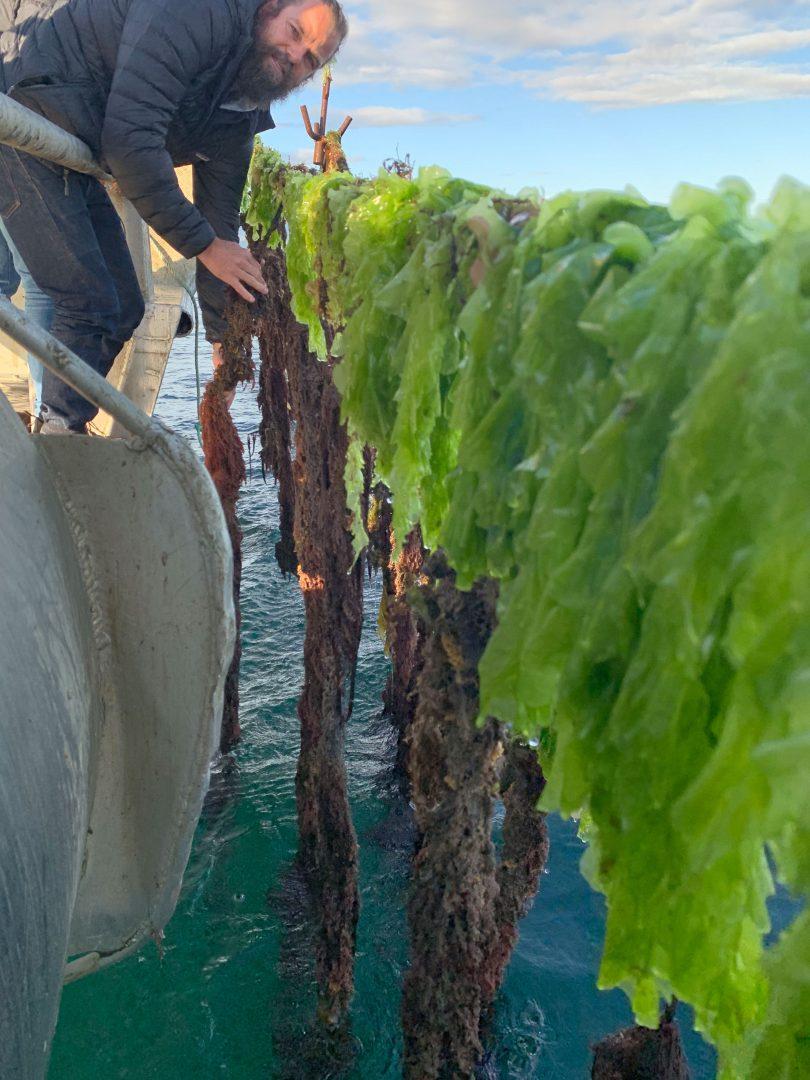SeaForest is growing Asparagopsis in Tasmania