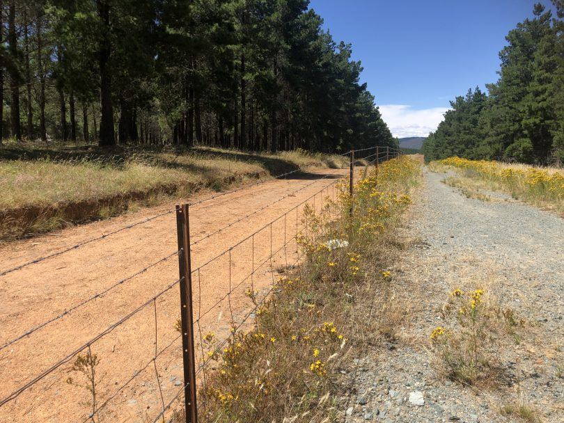 Track along fence line at Fairbairn Pine Forest