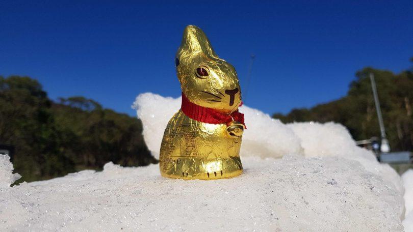 Corin Forest Easter egg hunt