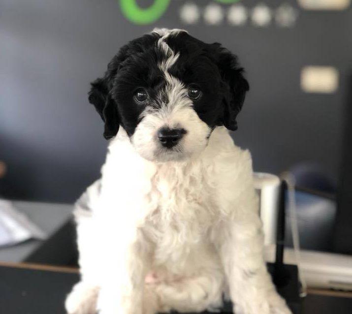 Doggy database