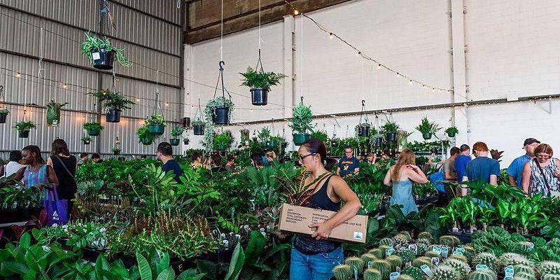 Indoor plant sale