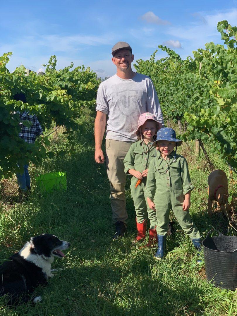 Lake George Winery harvest