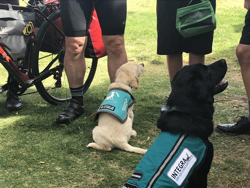 Integra service dog sitting at feet of humans