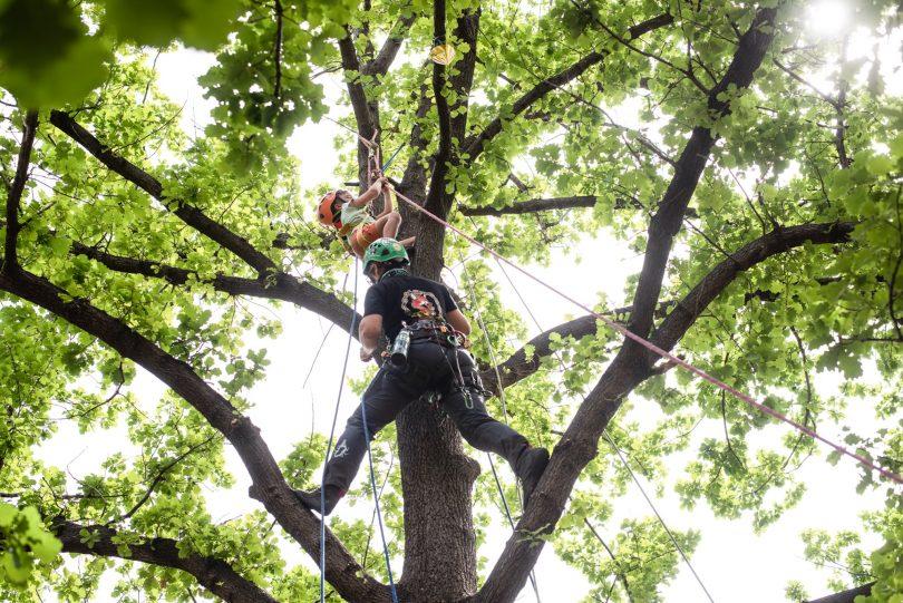 People climbing trees