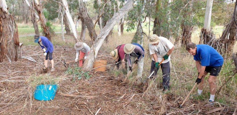 Croke Place Wetlands Landcare Group members clearing weeds in bush