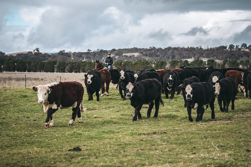 Claystone Farm, Hoskinstown