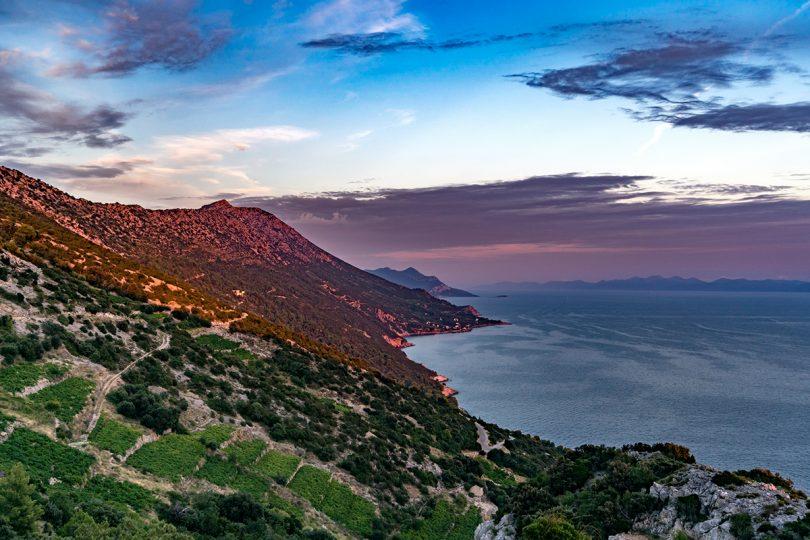 Croatia Vineyards