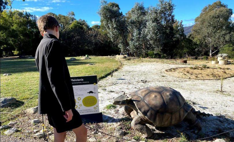 Boy looking at giant horned turtle exhibit at Australian National Botanic Gardens