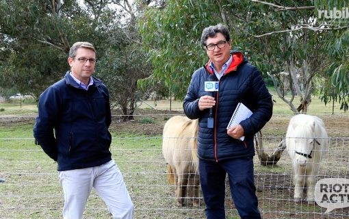 Weekly Sports Wrap with Tim Gavel at Pegasus Riding for the Disabled