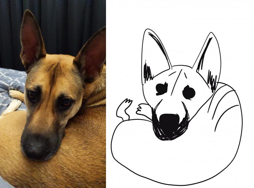 RSPCA Poorly Drawn Pets dog Vanessa Pryde