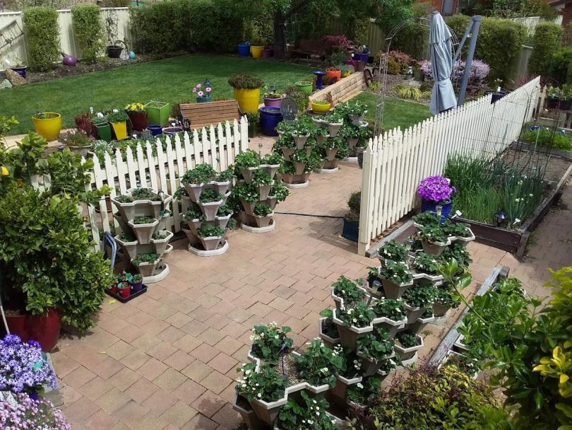 A productive vegetable garden