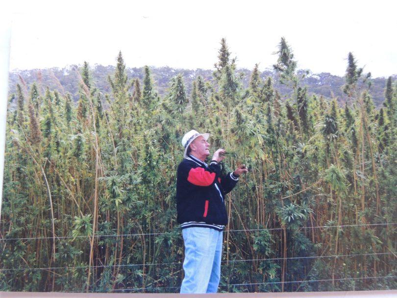 Keith Cole inspecting Goulburn's hemp crop