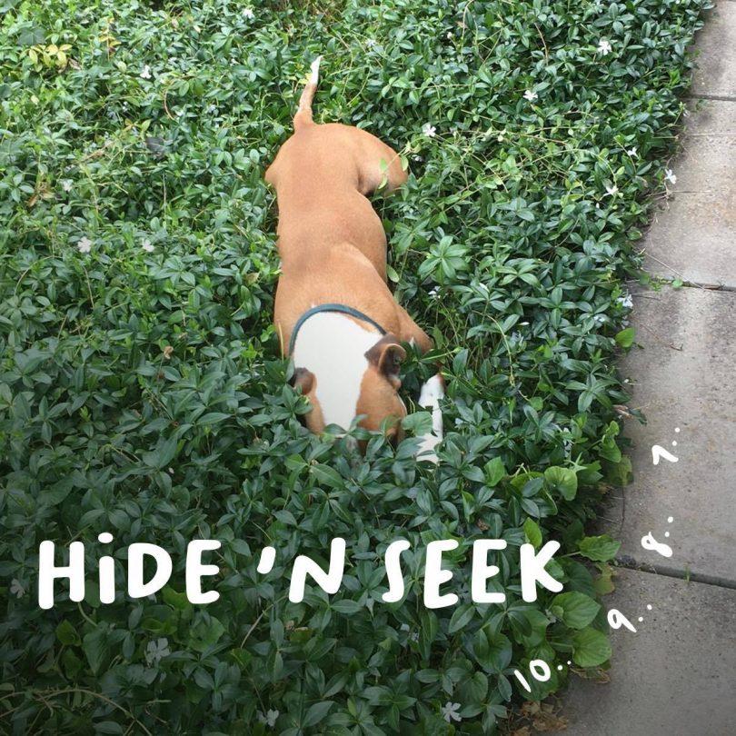 Homer the dog in bush