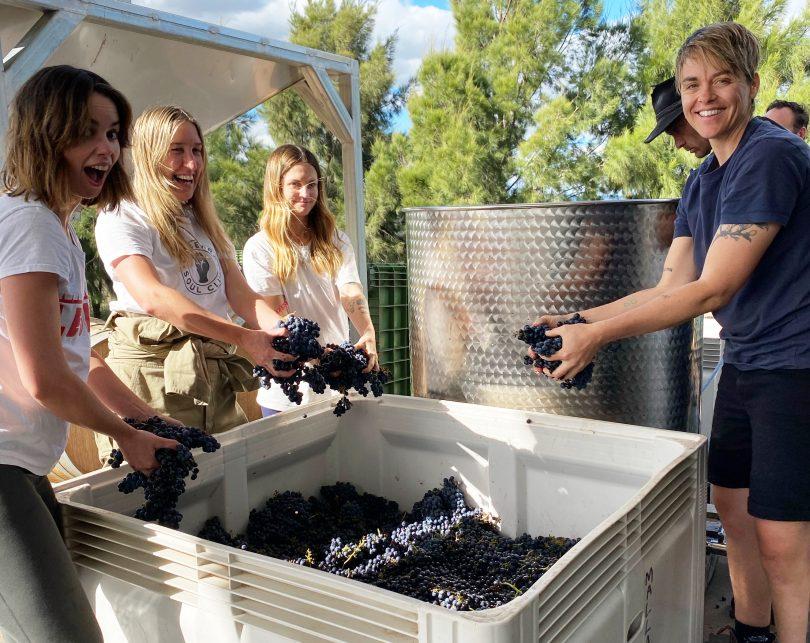 People crushing grapes at Mallaluka Wines