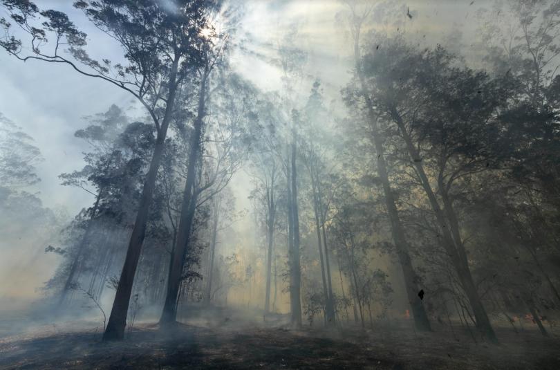 Smokey air in Australian bushland