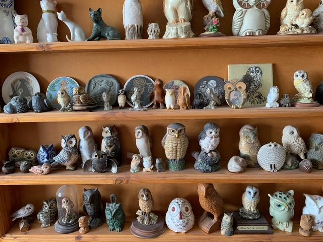 Owls on shelves