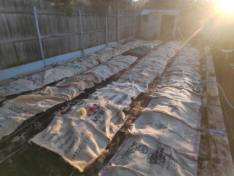 Garden beds covered in hessian sacks