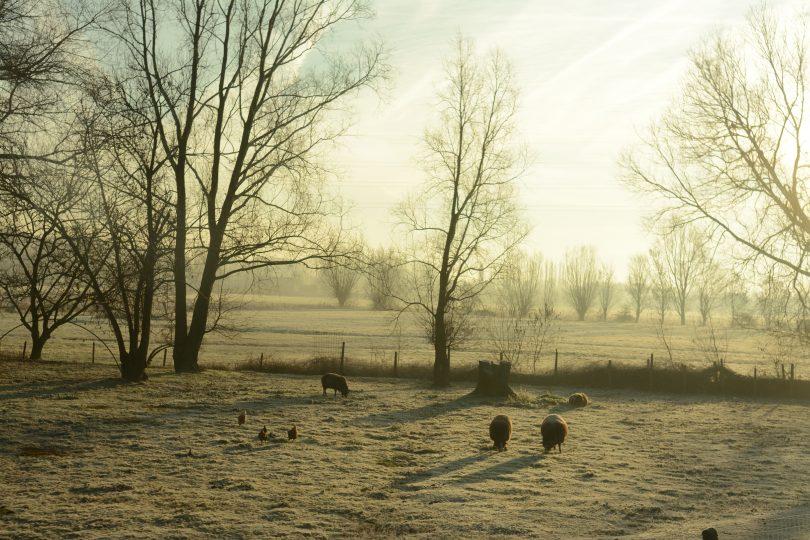 Winter Farmyard. Photo: Shutterstock.