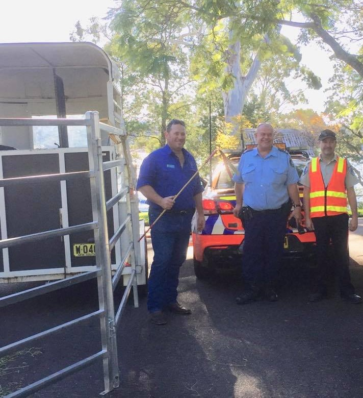 With the assistance of Rural Crime Prevention Team Investigators, local Police, the owner of the steer, and Eurobodalla Shire Council Rangers the runaway steer was recaptured. Photo: Rural Crime - NSW Police Facebook.