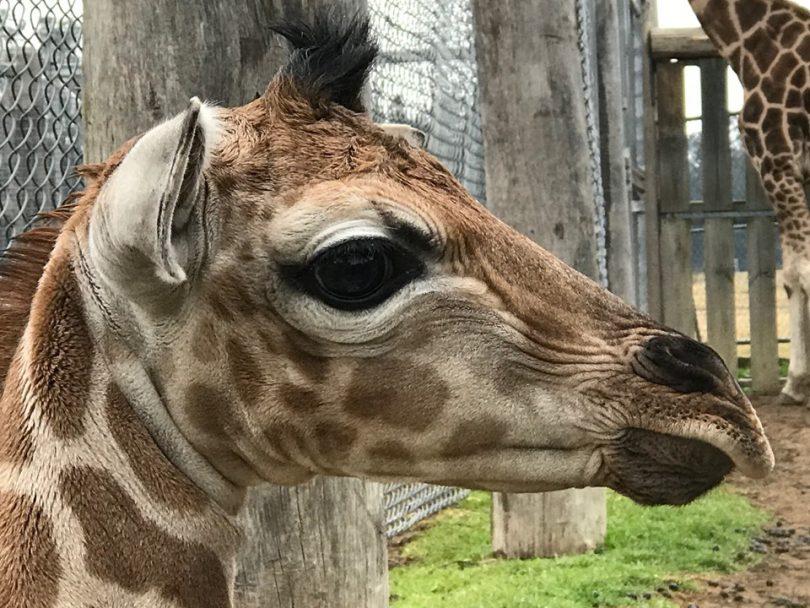 Baby Karn. Photo: Mogo Zoo.
