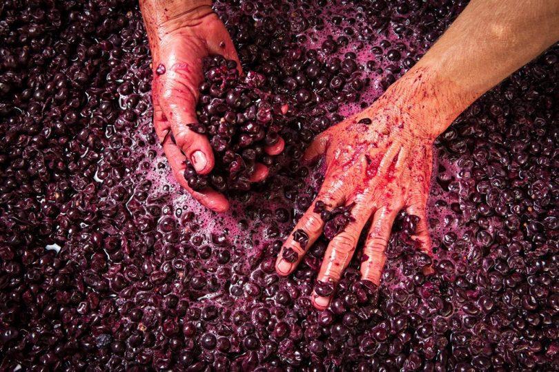 Intuitive wine-making, bio-dynamic farming, the rhythm of nature. Photo: Ngeringa Winery