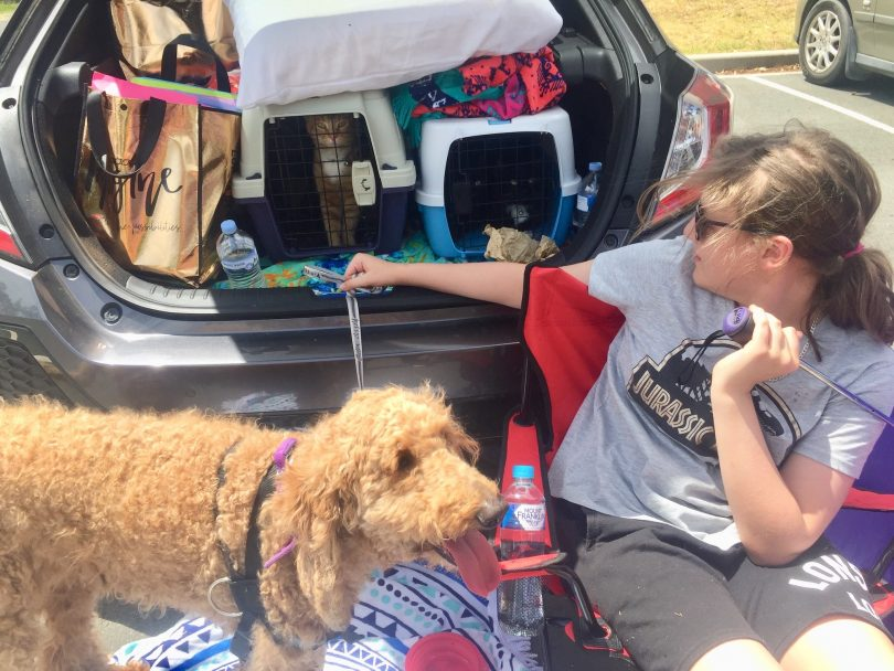 Evacuees with cats and dogs