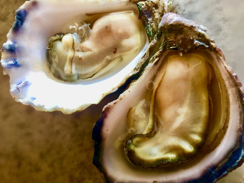 Close-up of oyster.