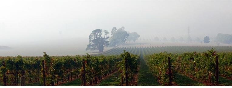 View of vineyard under a cloud of smoke.