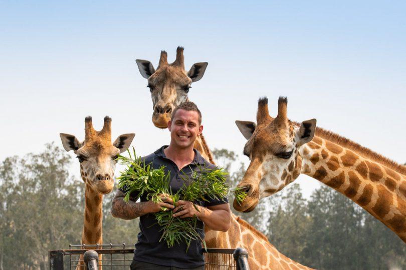 Zookeeper Chad Staples feeding three giraffes at Mogo Wildlife Park.