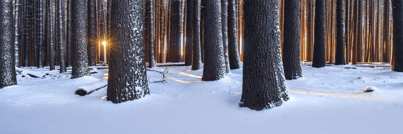 Sun poking through Sugar Pine Walk trees with snow on ground.