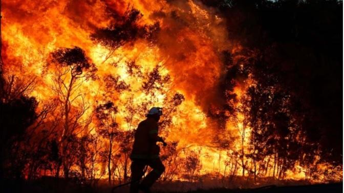 Firefighter battling bushfire.