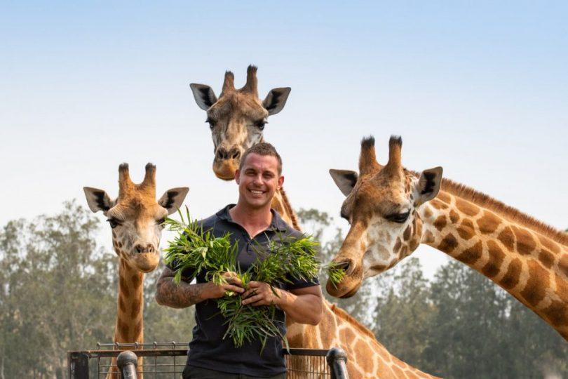 Mogo Wildlife Park's Chad Staples standing with giraffes.