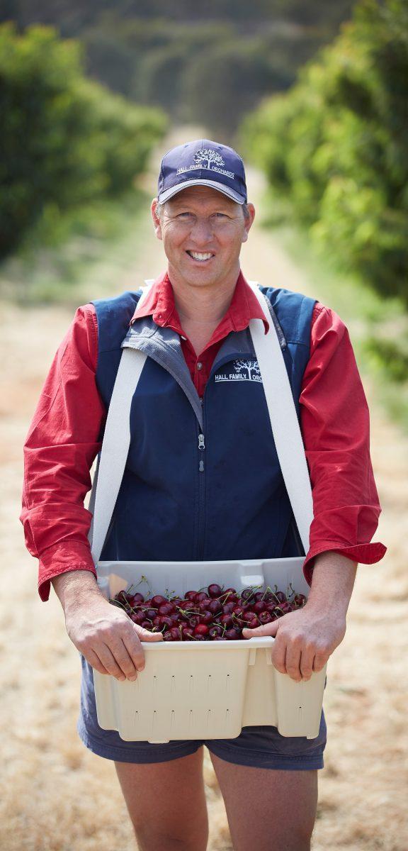 Chris Hall picking cherries.
