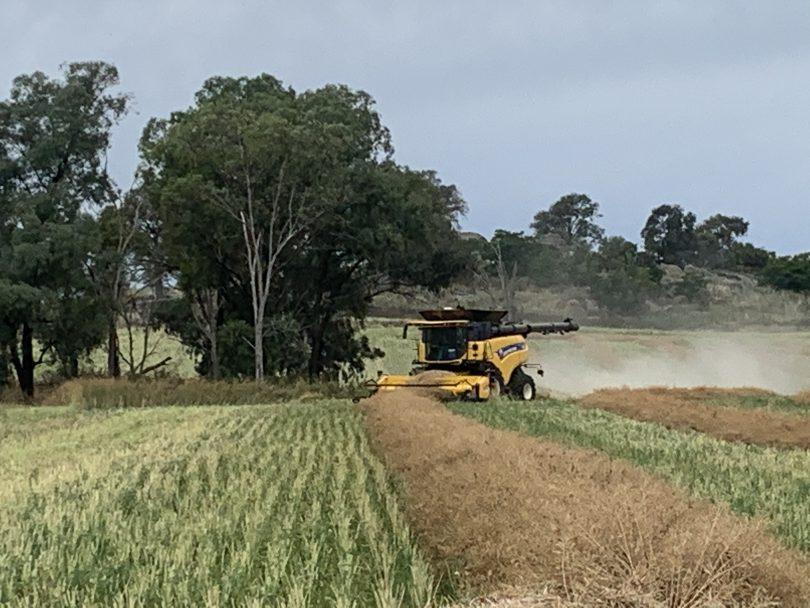 Canola harvesting on rural property.