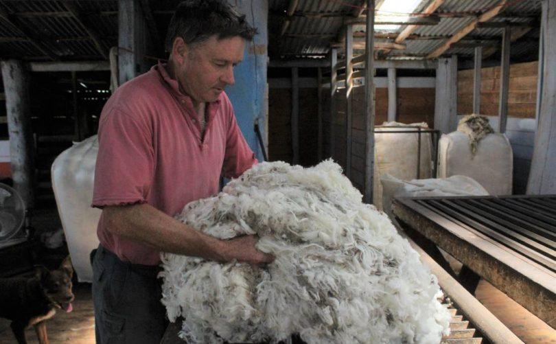 Ed Storey holding wool
